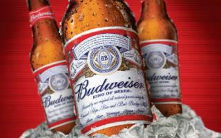 Пиво Бад (Bud): отзывы, виды и сорта, цена