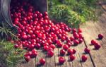 Настойка из брусники – быстрые и вкусные домашние рецепты
