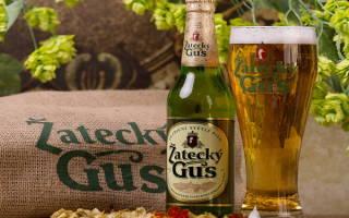 Пиво Жатецкий гусь: отзывы, виды и сорта, цена